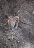 Śmieszna małpa skakać na skale obraz royalty free