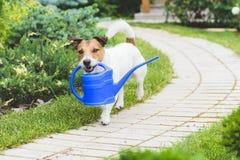Śmieszna ogrodniczka z podlewanie puszką robi irygaci Fotografia Stock