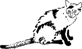 Śmieszna ręka rysujący kot Zdjęcie Royalty Free