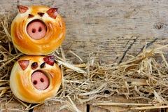 Śmieszne świniowate babeczki fotografia royalty free