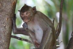 śmieszne małpy Zdjęcie Stock