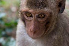 śmieszne małpy Fotografia Stock