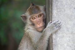 śmieszne małpy Obrazy Stock