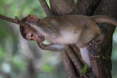 śmieszne małpy Zdjęcia Royalty Free