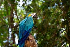 Śmieszne tropikalne papugi, Karaiby obraz royalty free