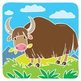 Śmieszni dzicy yak Zdjęcie Royalty Free