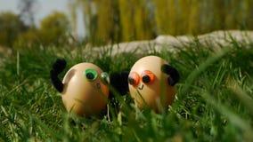 Śmieszni Easter jajka zdjęcie wideo