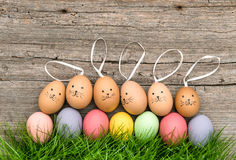 Śmieszni królika Easter jajka w zielonej trawie śliczna dekoracja Obrazy Royalty Free