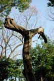 Śmieszni kształtni drzewa Zdjęcie Stock