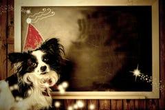 Śmieszni psi Bożenarodzeniowi kartka z pozdrowieniami kosmos kopii Zdjęcia Stock