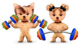 Śmieszni psy trenuje z barbells i dumbbells obraz stock
