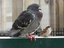Śmieszni ptaki siedzi na ławce Zdjęcia Royalty Free