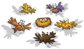 Śmieszni ptaki wokoło gniazdeczka Obrazy Stock