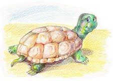 śmieszny żółw royalty ilustracja