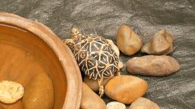 Śmieszny żółw czołgać się na podłoga woller w zoo zbiory wideo