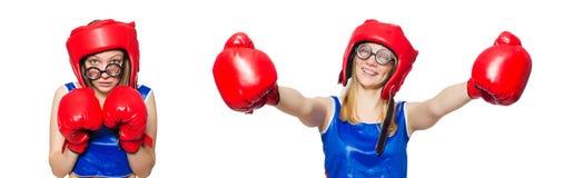 Śmieszny bokser odizolowywający na bielu Fotografia Stock