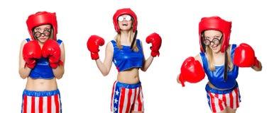 Śmieszny bokser odizolowywający na bielu Obraz Stock