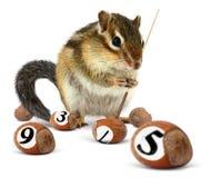 Śmieszny chipmunk bawić się snooker zdjęcie royalty free