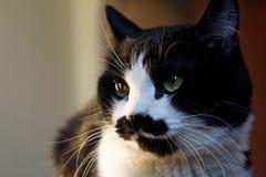 Śmieszny czarny i biały kot z niezwykłym kaganem egzamininuje środowisko obraz stock