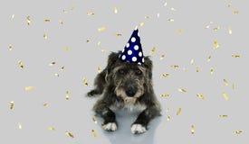 ŚMIESZNY CZARNY pies ŚWIĘTUJE nowego roku Z polki kropki przyjęcia KAPELUSZOWYM ŁGARSKIM puszkiem LUB urodziny BŁĘKITNEGO I BIAŁE zdjęcia royalty free