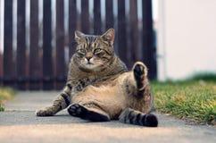 Śmieszny domowy kot fotografia stock