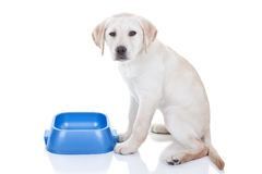 Śmieszny Głodny pies fotografia royalty free