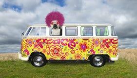 Śmieszny hipisa pies, VW autobus zdjęcie royalty free