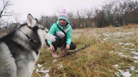 Śmieszny husky pies z różnymi oczami nadgryza kij na śnieżnej trawie swobodny ruch zbiory wideo