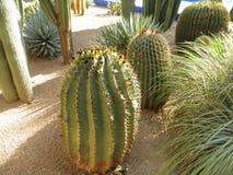 Śmieszny kaktus fotografia royalty free