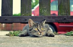 Śmieszny kot zdjęcie stock