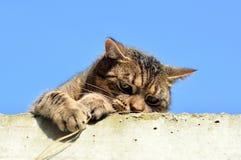 Śmieszny kot zdjęcia royalty free