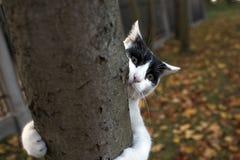 Śmieszny kot na drzewie fotografia stock