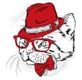 Śmieszny kot w kapeluszu i okularach przeciwsłonecznych ilustracja wektor