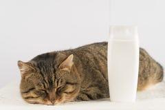Śmieszny kot z akcesoriami dla wanny obrazy stock