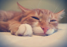 Śmieszny kota kaganiec obrazy royalty free