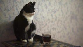 Śmieszny kota obsiadanie na stole zbiory