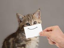 Śmieszny kota portret z uśmiechem na kartonie obrazy royalty free