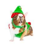 Śmieszny królik doświadczalny Jest ubranym Bożenarodzeniowego elfa kostium Zdjęcia Stock