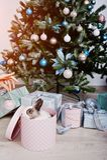 Śmieszny królika królik przy prezenta pudełkiem pod nowego roku drzewem Szczęśliwy winte Zdjęcie Royalty Free