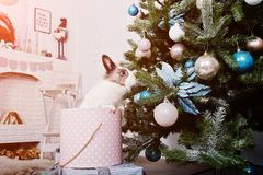 Śmieszny królika królik przy prezenta pudełkiem pod nowego roku drzewem Szczęśliwy winte Obrazy Stock