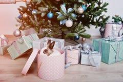 Śmieszny królika królik przy prezenta pudełkiem pod nowego roku drzewem Szczęśliwy winte Fotografia Stock