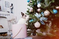 Śmieszny królika królik przy prezenta pudełkiem pod nowego roku drzewem Szczęśliwy winte Zdjęcia Stock