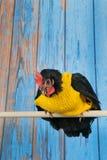 Śmieszny kurczak z żółtym pulowerem fotografia royalty free