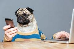 Śmieszny mężczyzna z mops psią głową używa laptop i smartphone Zdjęcia Stock