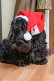 Śmieszny niegrzeczny pies w Santa kapeluszu obrazy stock