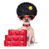 Śmieszny niemy wakacje pies zdjęcia stock