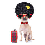 Śmieszny niemy wakacje pies zdjęcie royalty free