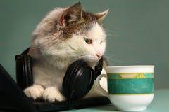 Śmieszny obrazek kot z notatnikiem i hełmofonami zdjęcie stock