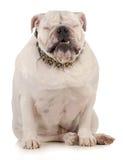 Śmieszny pies Zdjęcia Royalty Free