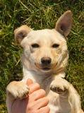 Śmieszny pies Fotografia Royalty Free